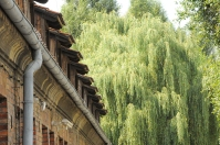 weeping willow at Auschwitz