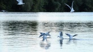 Moskva River - birds